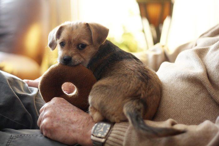 子犬はおもちゃが大好き
